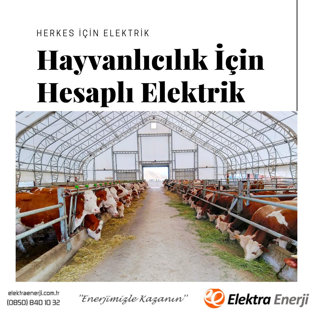 Hayvanlıcılık İçin Hesaplı Elektrik